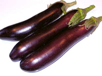 Long purple aubergine variety